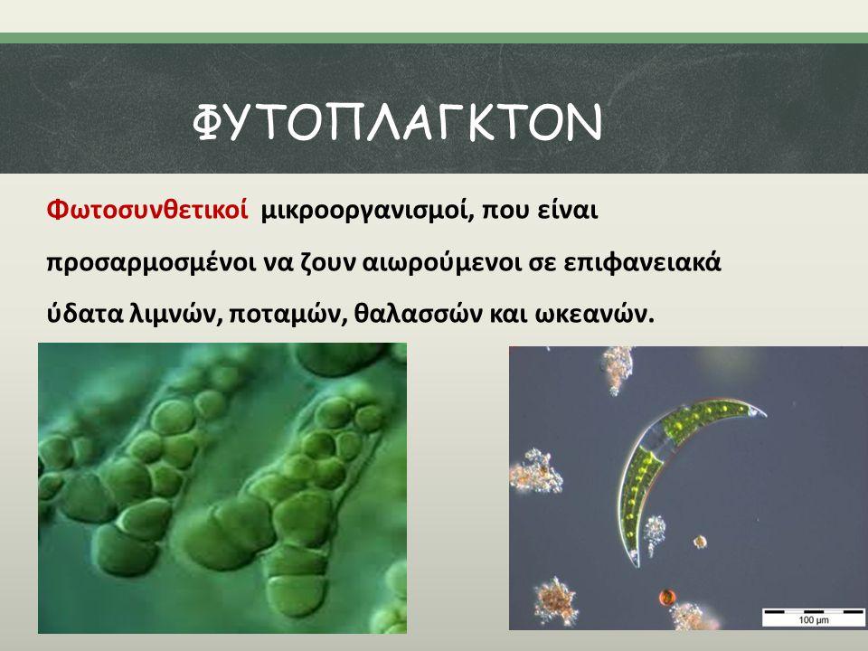 ΦΥΤΟΠΛΑΓΚΤΟΝ