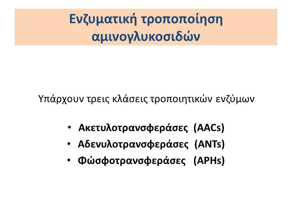 Ενζυματική τροποποίηση αμινογλυκοσιδών