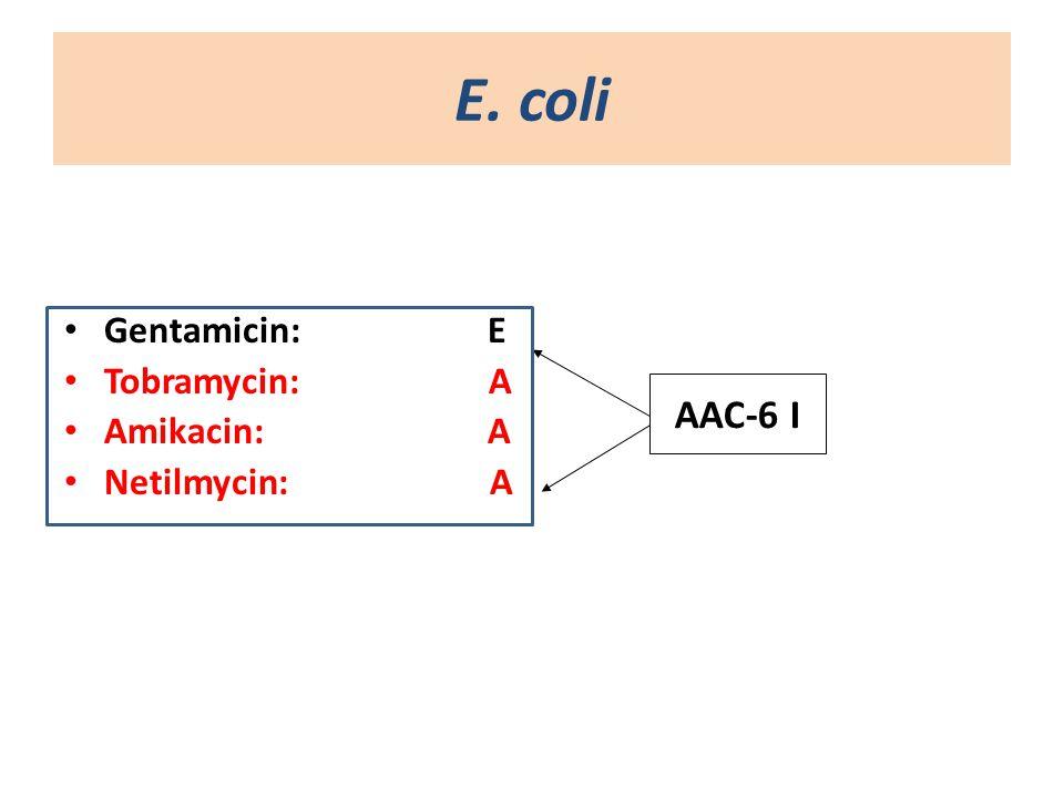 Ε. coli Gentamicin: E. Tobramycin: Α. Amikacin: Α. Netilmycin: Α.