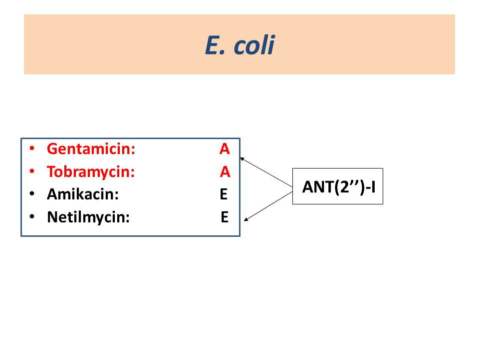 Ε. coli Gentamicin: A Tobramycin: Α Amikacin: E Netilmycin: E
