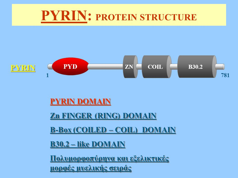 PYRIN: PROTEIN STRUCTURE