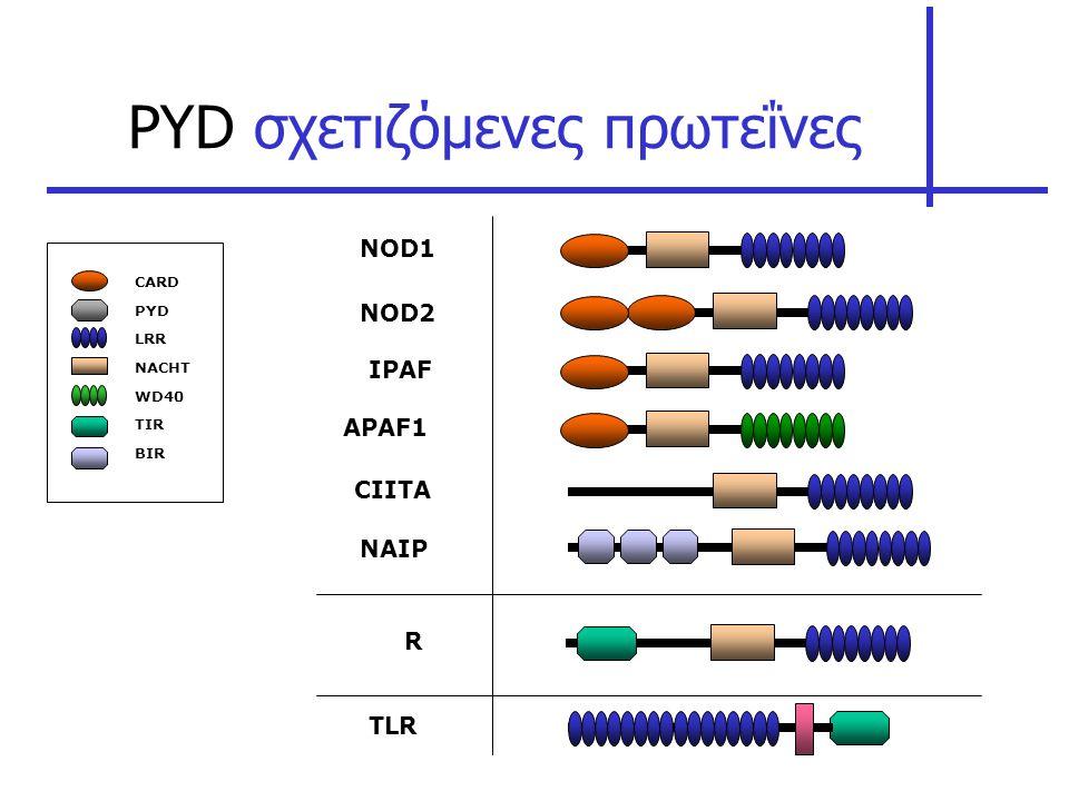 PYD σχετιζόμενες πρωτεΐνες
