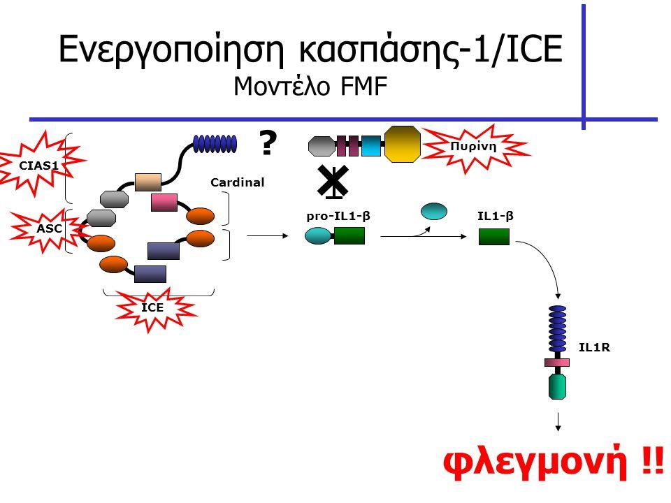 Ενεργοποίηση κασπάσης-1/ICE Μοντέλο FMF