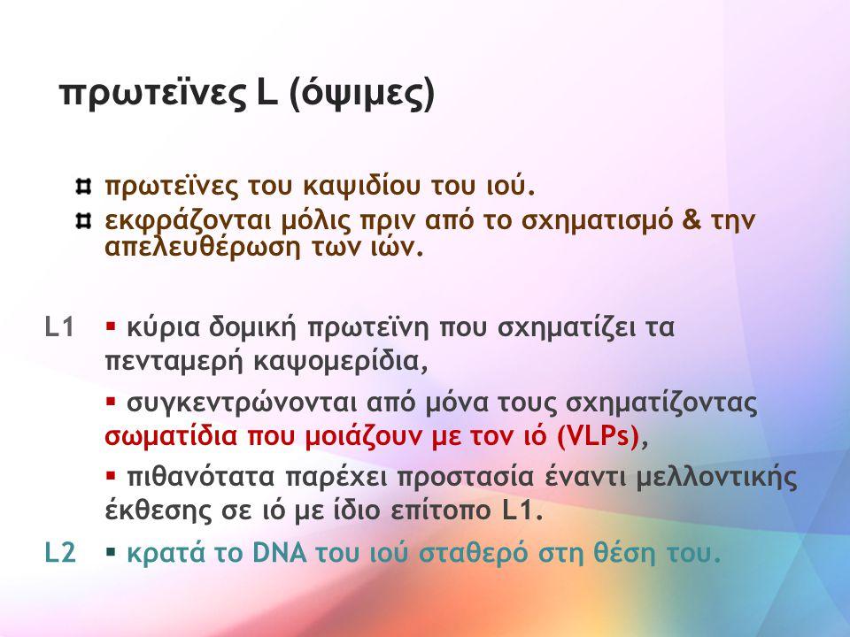 πρωτεϊνες L (όψιμες) πρωτεϊνες του καψιδίου του ιού.