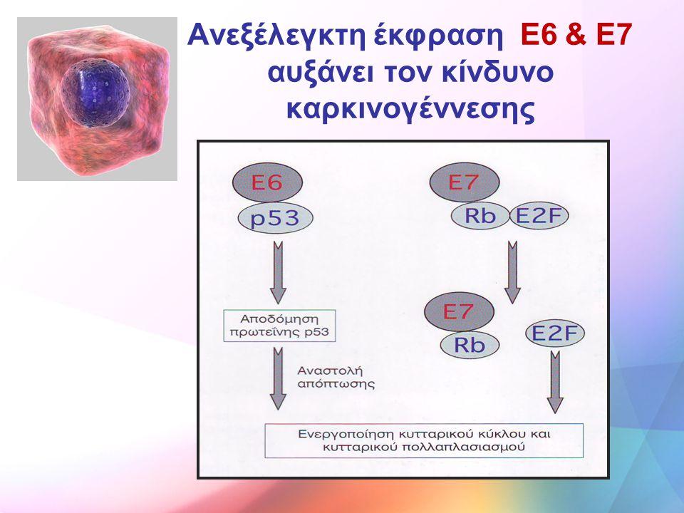 Ανεξέλεγκτη έκφραση E6 & Ε7 αυξάνει τον κίνδυνο καρκινογέννεσης