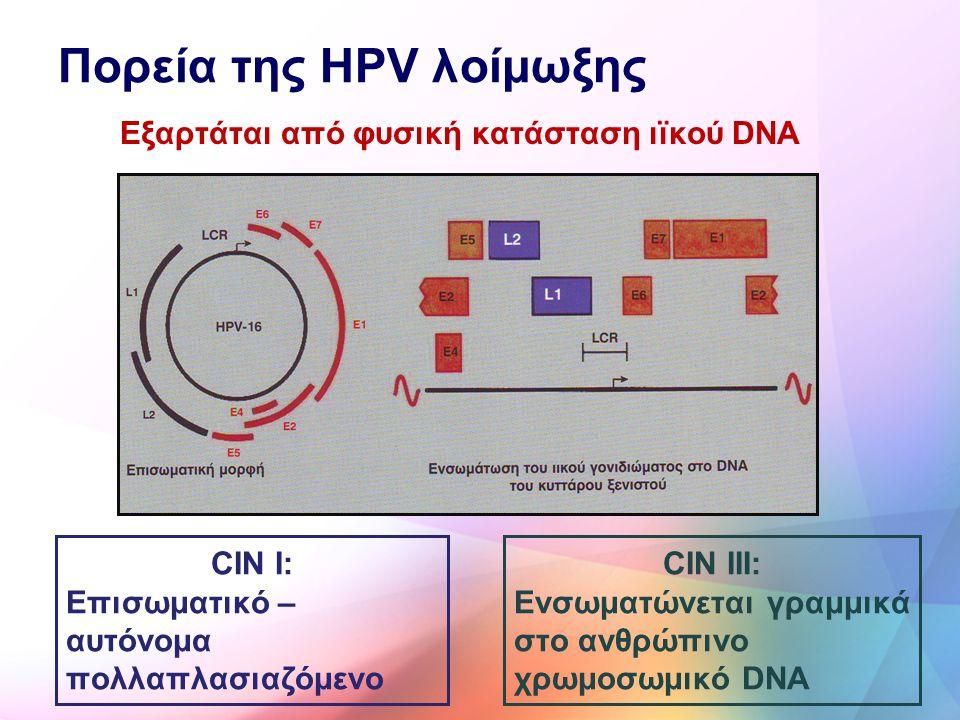 Πορεία της HPV λοίμωξης