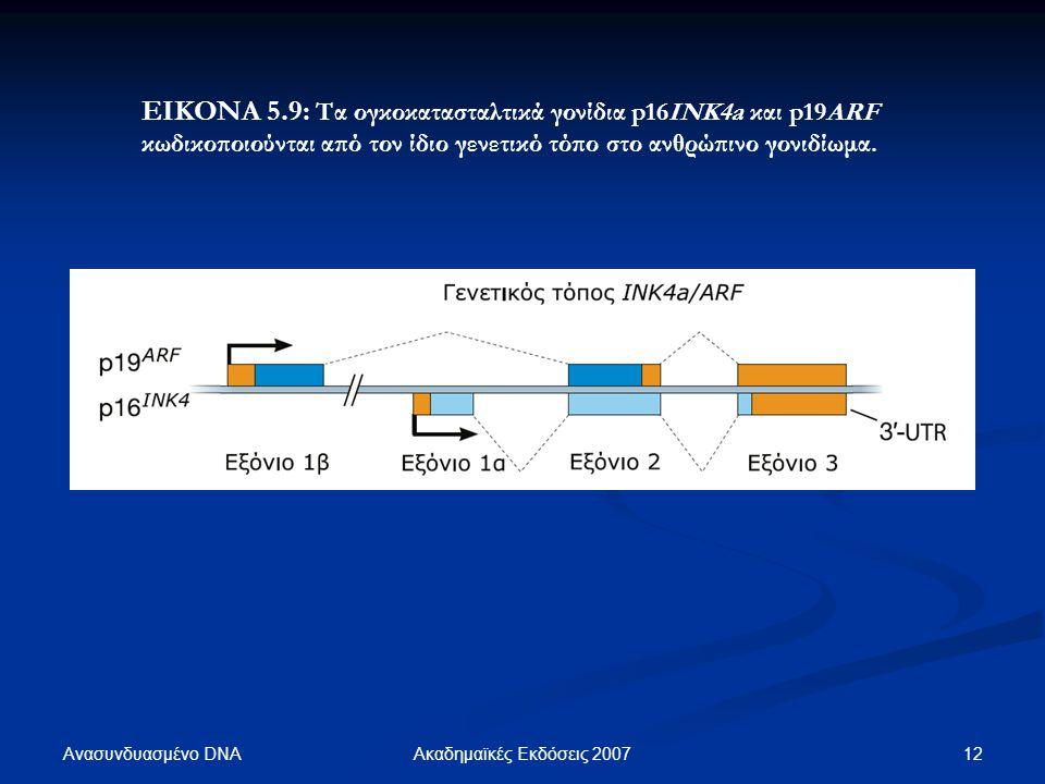ΕΙΚΟΝΑ 5.9: Τα ογκοκατασταλτικά γονίδια p16ΙΝΚ4a και p19ARF κωδικοποιούνται από τον ίδιο γενετικό τόπο στο ανθρώπινο γονιδίωμα.