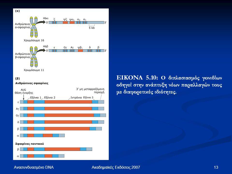 ΕΙΚΟΝΑ 5.10: Ο διπλασιασμός γονιδίων οδηγεί στην ανάπτυξη νέων παραλλαγών τους με διαφορετικές ιδιότητες.