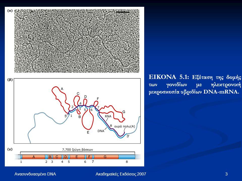 ΕΙΚΟΝΑ 5.1: Εξέταση της δομής των γονιδίων με ηλεκτρονική μικροσκοπία υβριδίων DNA-mRNA.