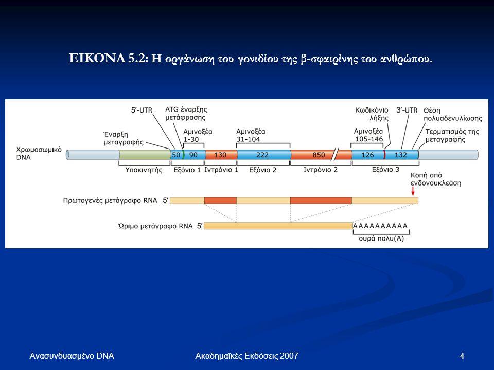 ΕΙΚΟΝΑ 5.2: Η οργάνωση του γονιδίου της β-σφαιρίνης του ανθρώπου.