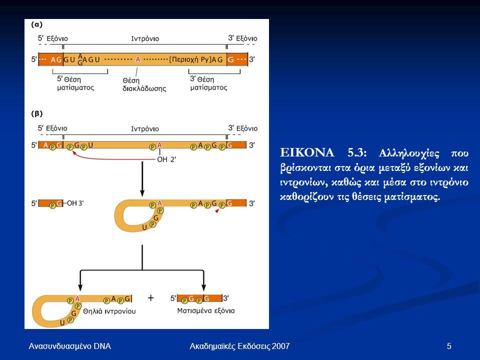 ΕΙΚΟΝΑ 5.3: Αλληλουχίες που βρίσκονται στα όρια μεταξύ εξονίων και ιντρονίων, καθώς και μέσα στο ιντρόνιο καθορίζουν τις θέσεις ματίσματος.