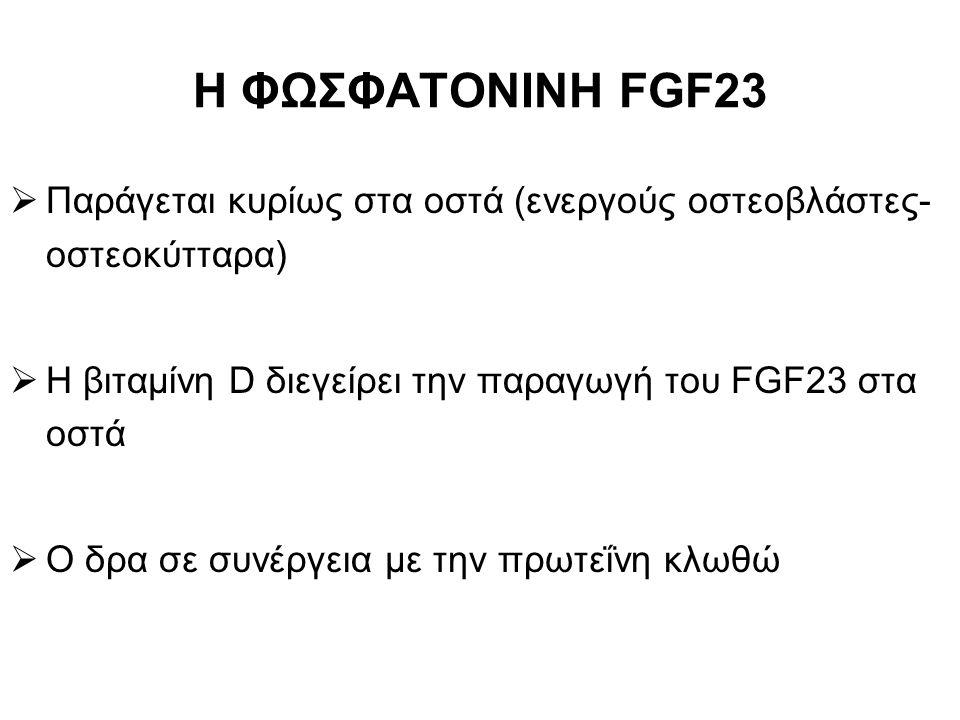 Η ΦΩΣΦΑΤΟΝΙΝΗ FGF23 Παράγεται κυρίως στα οστά (ενεργούς οστεοβλάστες- οστεοκύτταρα) Η βιταμίνη D διεγείρει την παραγωγή του FGF23 στα οστά.