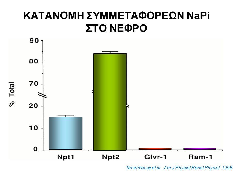 ΚΑΤΑΝΟΜΗ ΣΥΜΜΕΤΑΦΟΡΕΩΝ NaPi ΣΤΟ ΝΕΦΡΟ