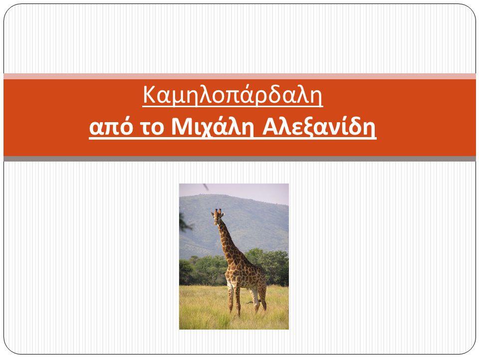 Καμηλοπάρδαλη από το Μιχάλη Αλεξανίδη