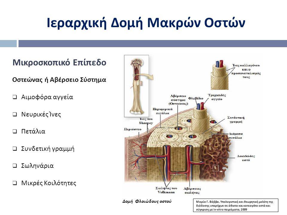 Ιεραρχική Δομή Μακρών Οστών