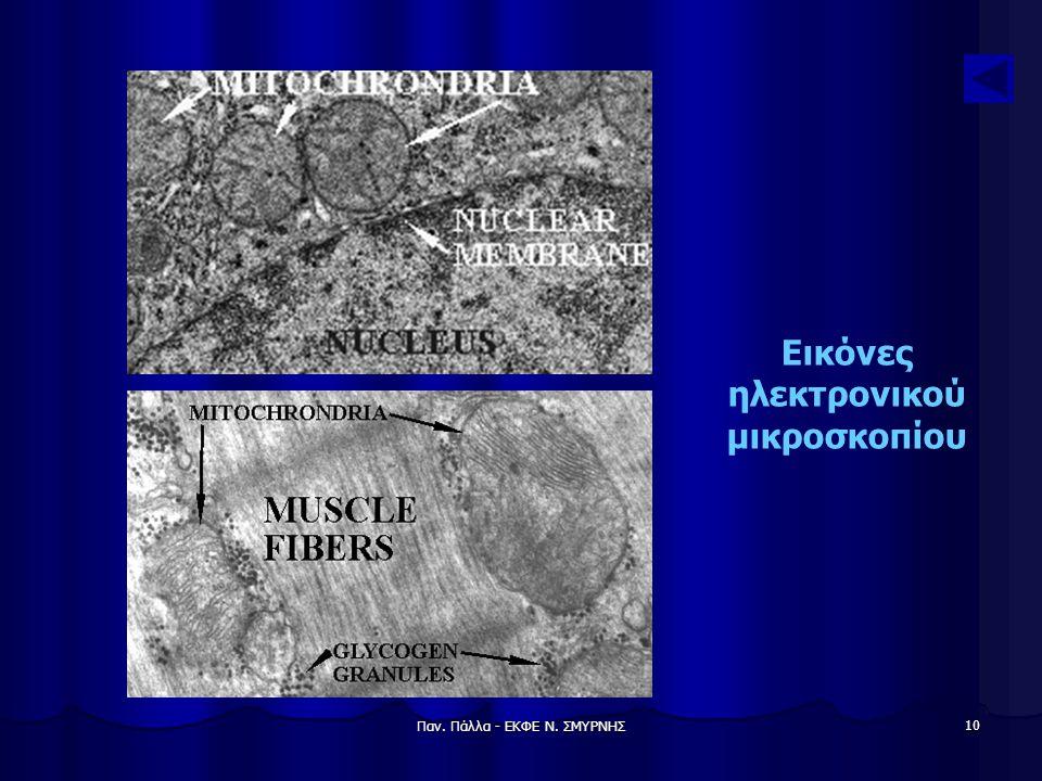 Εικόνες ηλεκτρονικού μικροσκοπίου