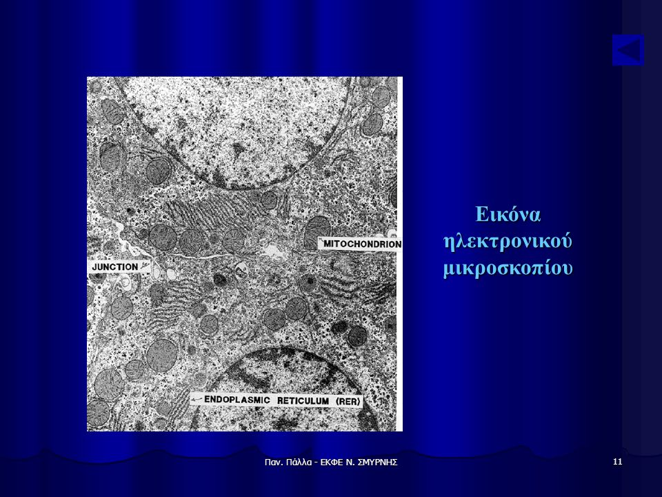 Εικόνα ηλεκτρονικού μικροσκοπίου