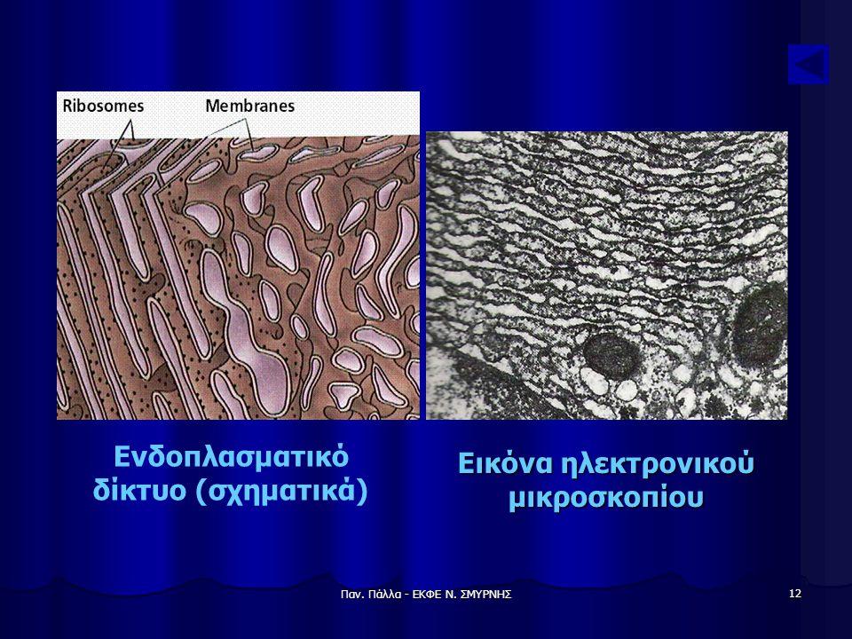 Ενδοπλασματικό δίκτυο (σχηματικά) Εικόνα ηλεκτρονικού μικροσκοπίου