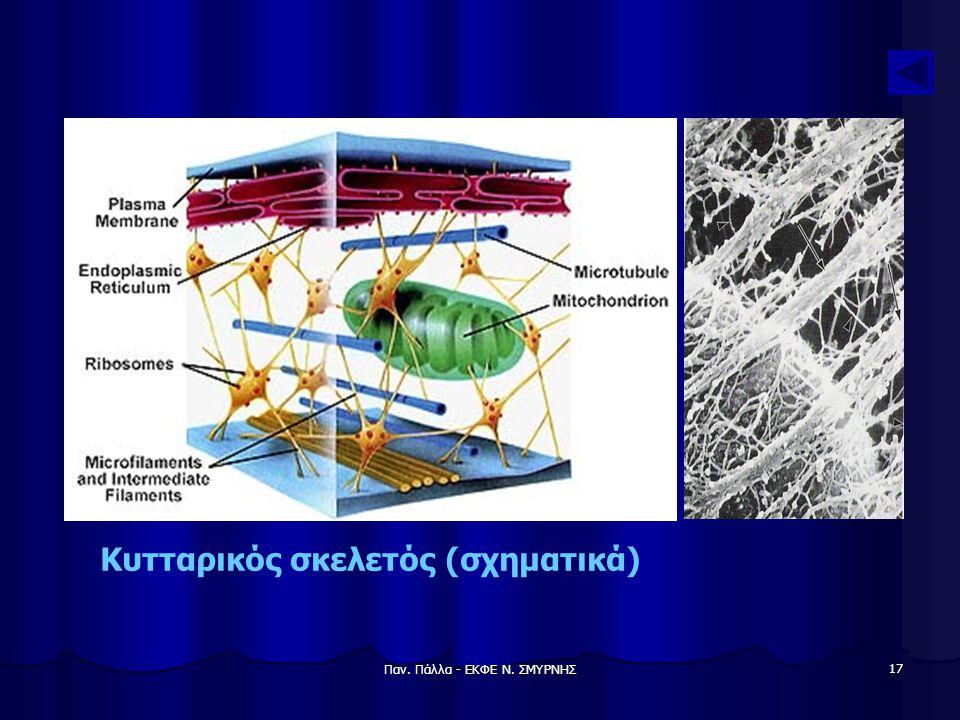 Κυτταρικός σκελετός (σχηματικά)