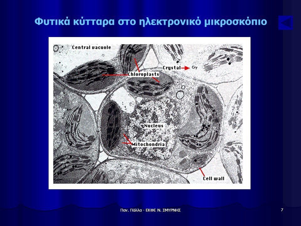 Φυτικά κύτταρα στο ηλεκτρονικό μικροσκόπιο