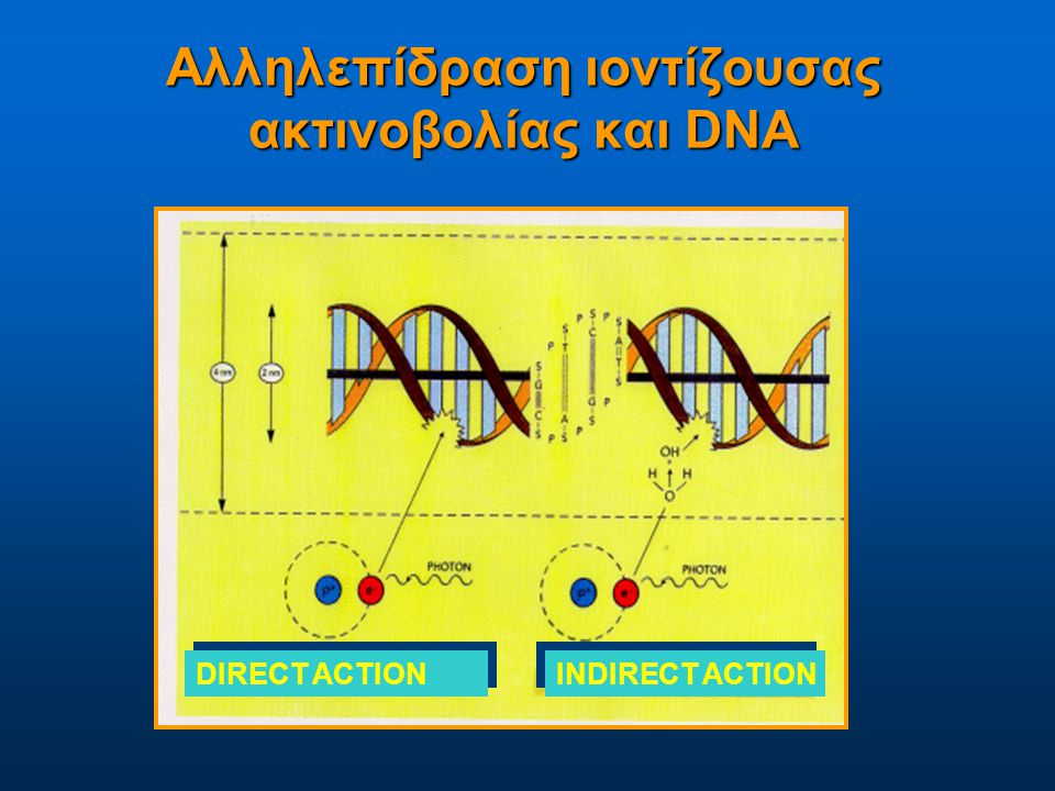 Αλληλεπίδραση ιοντίζουσας ακτινοβολίας και DNA