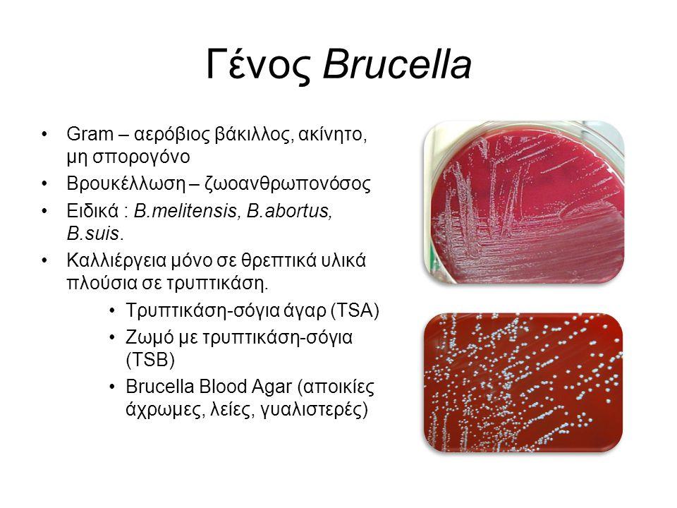 Γένος Brucella Gram – αερόβιος βάκιλλος, ακίνητο, μη σπορογόνο
