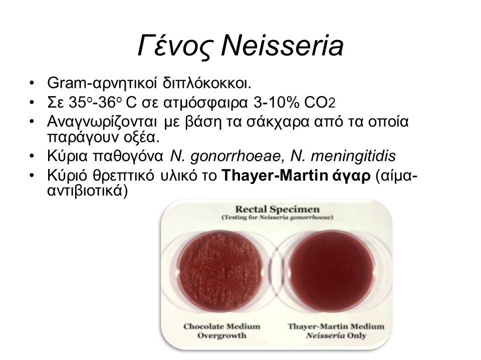 Γένος Neisseria Gram-αρνητικοί διπλόκοκκοι.