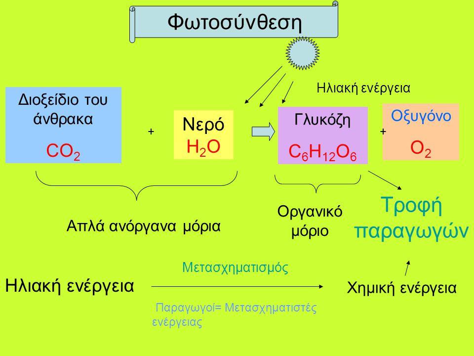 Φωτοσύνθεση Τροφή παραγωγών CO2 ΝερόH2O Ο2 C6H12O6 Ηλιακή ενέργεια