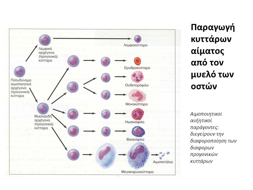 Παραγωγή κυττάρων αίματος από τον μυελό των οστών
