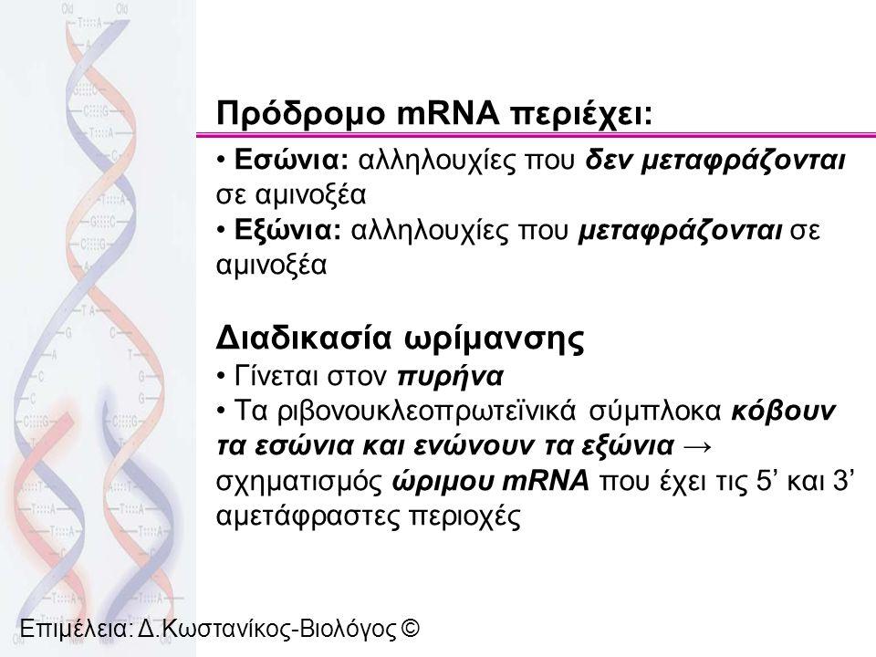 Πρόδρομο mRNA περιέχει: