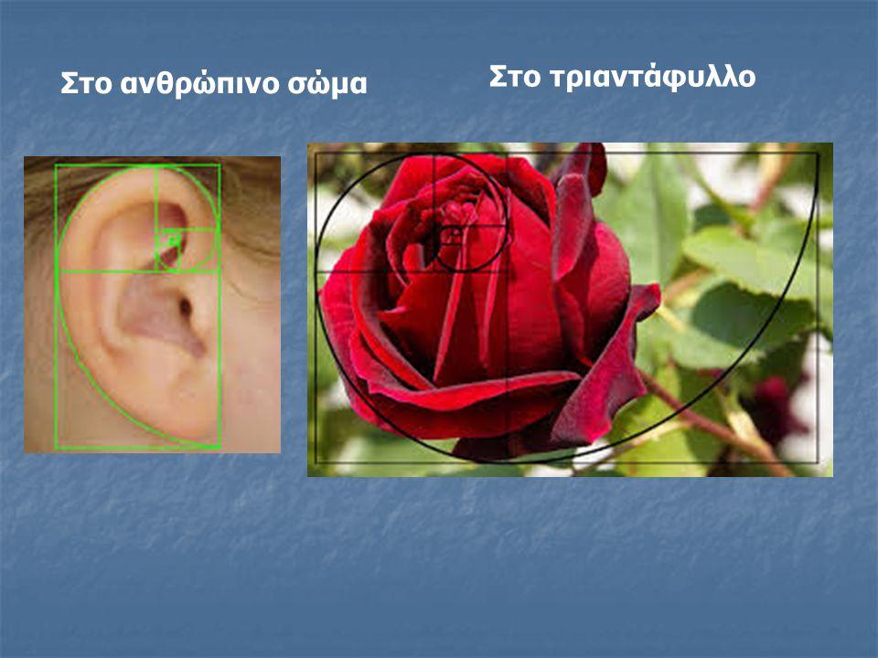 Στο τριαντάφυλλο Στο ανθρώπινο σώμα