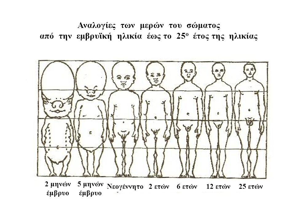 Αναλογίες των μερών του σώματος