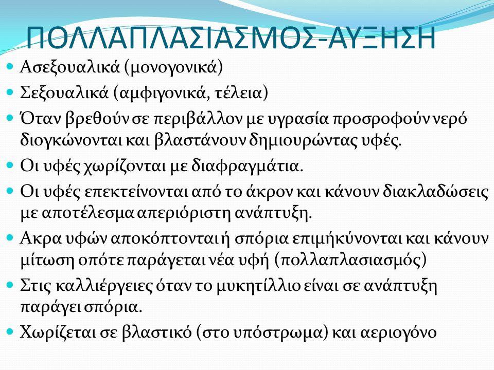 ΠΟΛΛΑΠΛΑΣΙΑΣΜΟΣ-ΑΥΞΗΣΗ