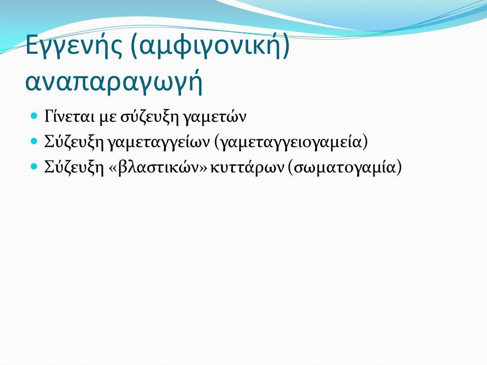 Εγγενής (αμφιγονική) αναπαραγωγή