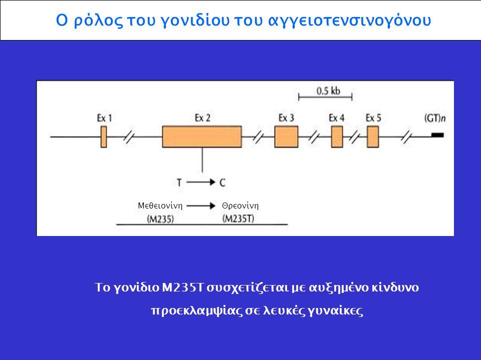 Ο ρόλος του γονιδίου του αγγειοτενσινογόνου