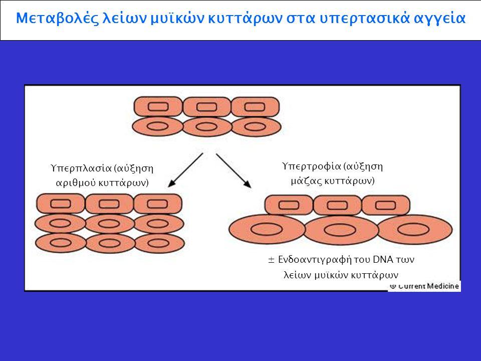 Μεταβολές λείων μυϊκών κυττάρων στα υπερτασικά αγγεία