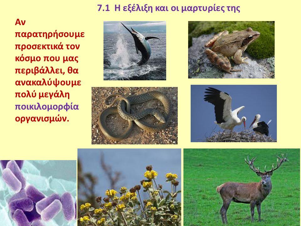 7.1 Η εξέλιξη και οι μαρτυρίες της
