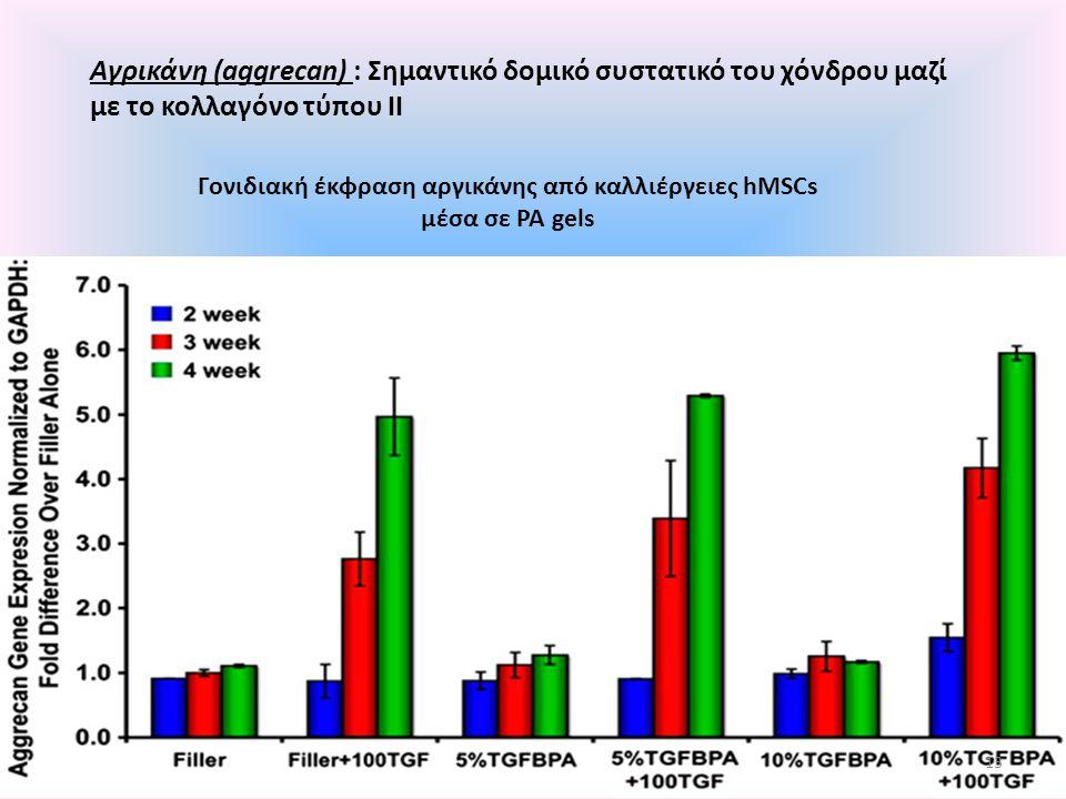 Γονιδιακή έκφραση αργικάνης από καλλιέργειες hMSCs μέσα σε ΡΑ gels