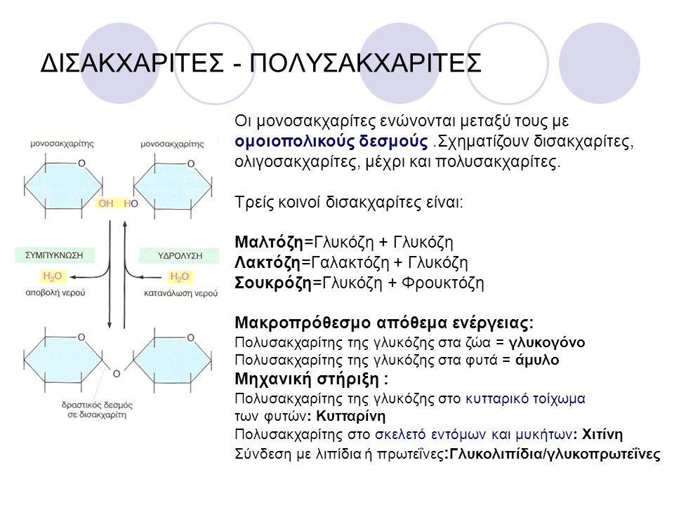 ΔΙΣΑΚΧΑΡΙΤΕΣ - ΠΟΛΥΣΑΚΧΑΡΙΤΕΣ