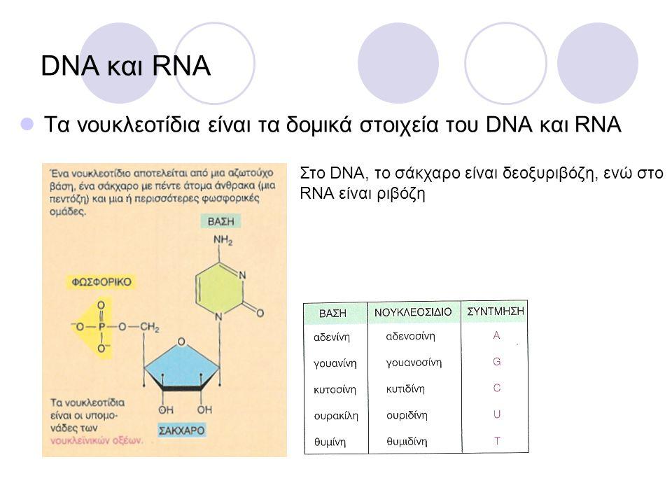 DNA και RNA Τα νουκλεοτίδια είναι τα δομικά στοιχεία του DNA και RNA