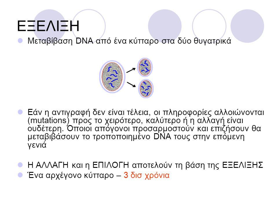 ΕΞΕΛΙΞΗ Μεταβίβαση DNA από ένα κύτταρο στα δύο θυγατρικά