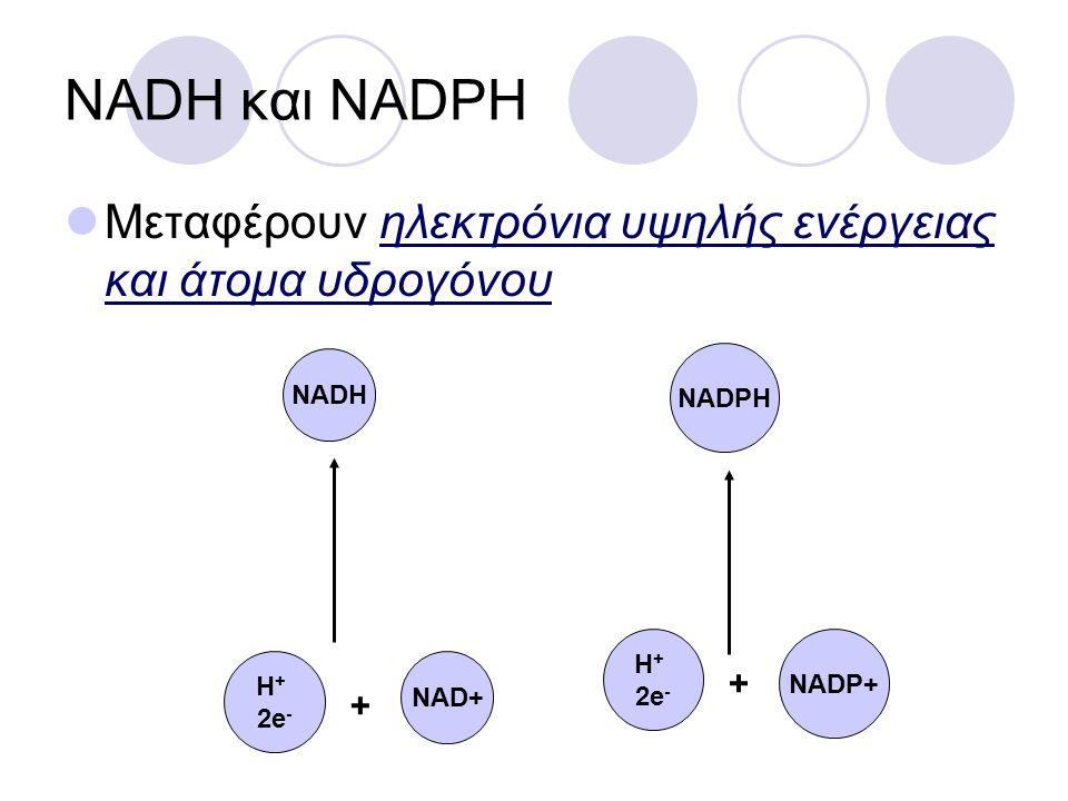 NADH και NADPH Μεταφέρουν ηλεκτρόνια υψηλής ενέργειας και άτομα υδρογόνου. NADH. H+ 2e- + NAD+