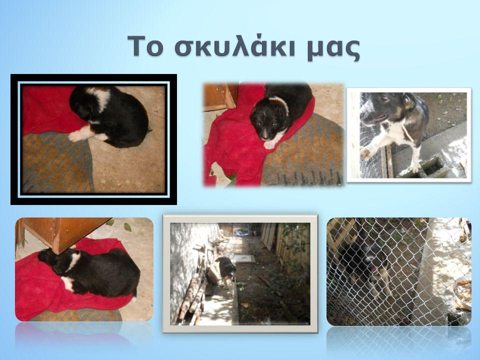 Το σκυλάκι μας