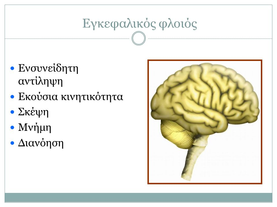Εγκεφαλικός φλοιός Ενσυνείδητη αντίληψη Εκούσια κινητικότητα Σκέψη