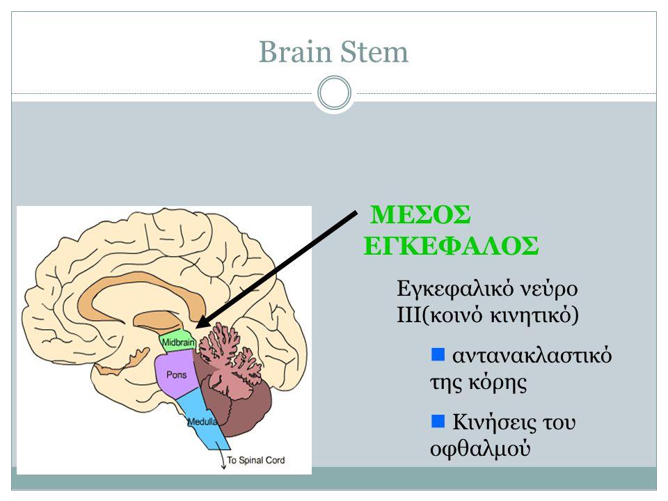 Brain Stem ΜΕΣΟΣ ΕΓΚΕΦΑΛΟΣ Εγκεφαλικό νεύρο III(κοινό κινητικό)