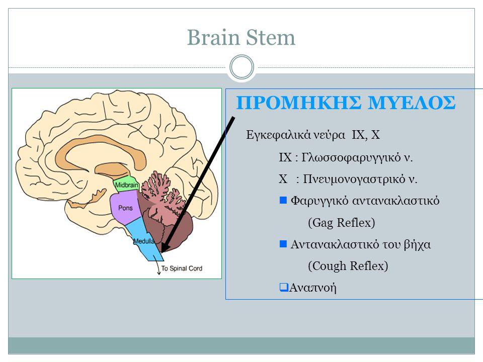 Brain Stem ΠΡΟΜΗΚΗΣ ΜΥΕΛΟΣ Εγκεφαλικά νεύρα IX, X