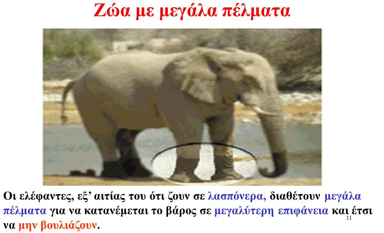 Ζώα με μεγάλα πέλματα