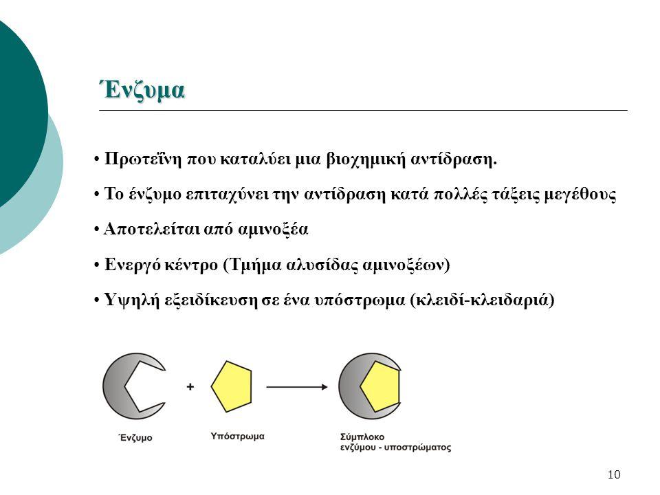 Ένζυμα Πρωτεΐνη που καταλύει μια βιοχημική αντίδραση.