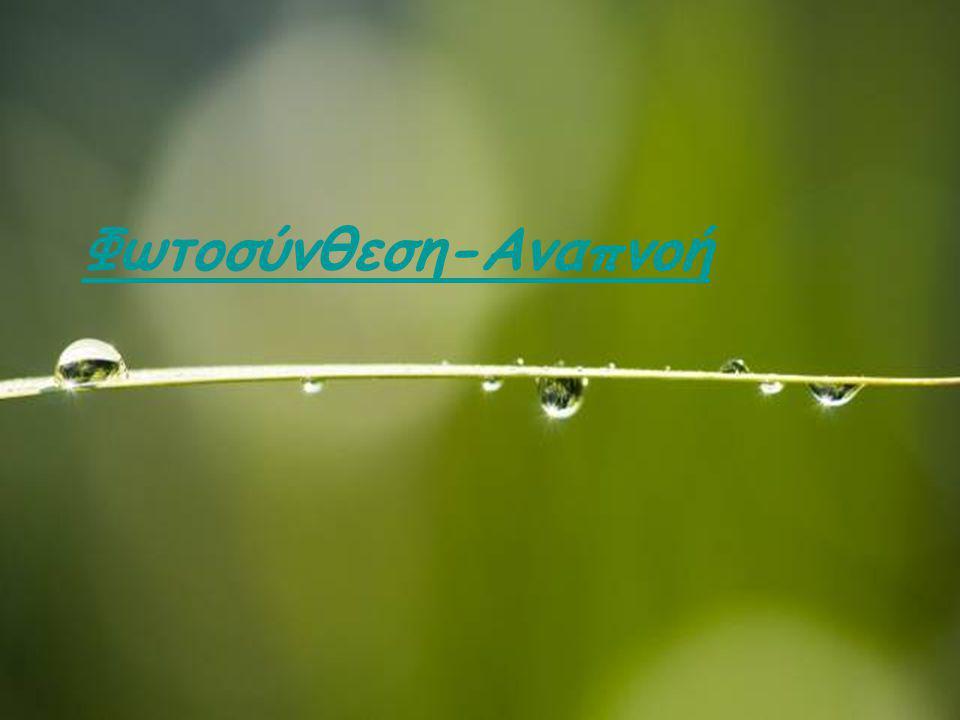 Φωτοσύνθεση-Αναπνοή Ε. Λιαναντωνάκη Βιολόγος