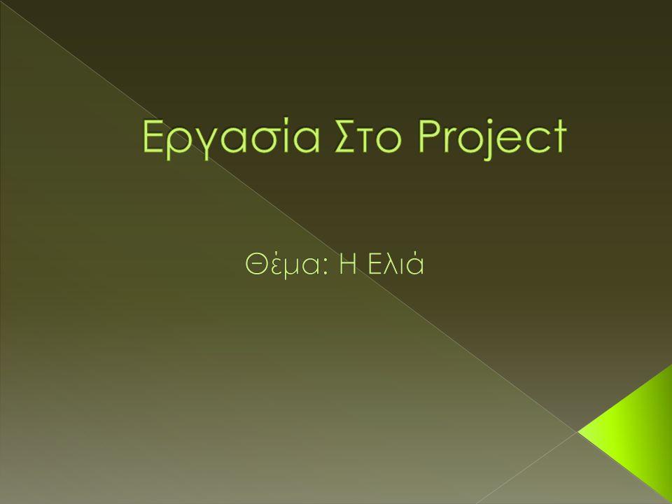 Εργασία Στο Project Θέμα: Η Ελιά
